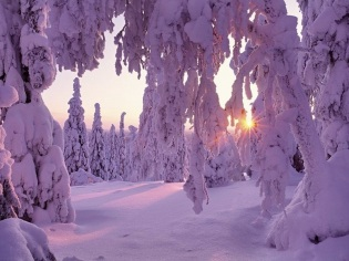 taiga-forest-finland